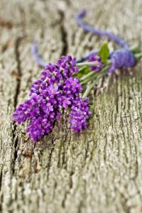 Lavendelblüten, Lavendelstrauß auf Holz